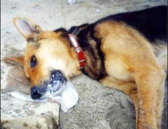 Σχηματισμός δικογραφίας σε βάρος άγνωστου δράστη για παράβαση του Νόμου περί προστασίας ζώων συντροφιάς