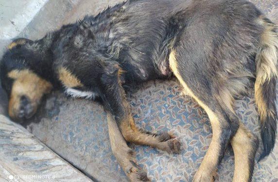 Μαύρη μέρα για τους ζωόφιλους στο Ναύπλιο. Σκληρές εικόνες (Pics, Vid)